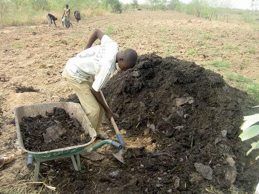 Compost champ de zai Guie Burkina