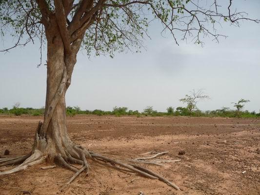 Dégradation biodiversité Sahel