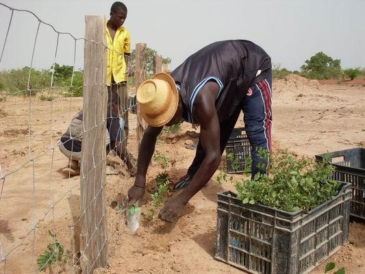 Reboisement haie mixte burkina Faso